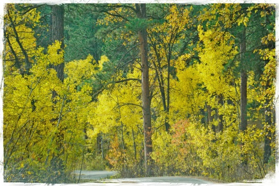 Black Hills National Forest 2