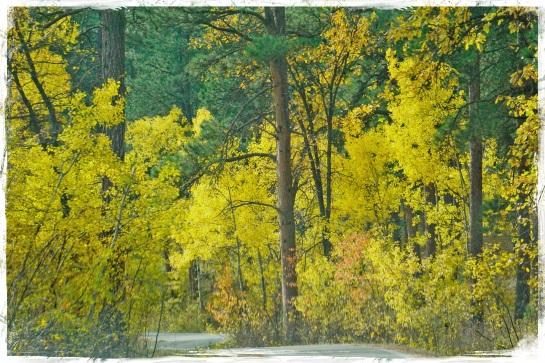 Black Hills National Forest 2