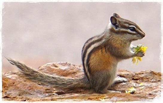 Black Hills National Forest 3