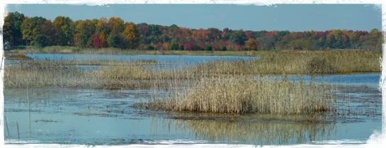 Delaware wetlands 2