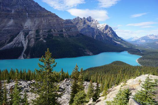 Lake Peyto - Alberta Canada