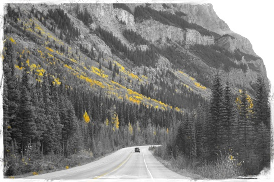 on the road - Columbia Icefields