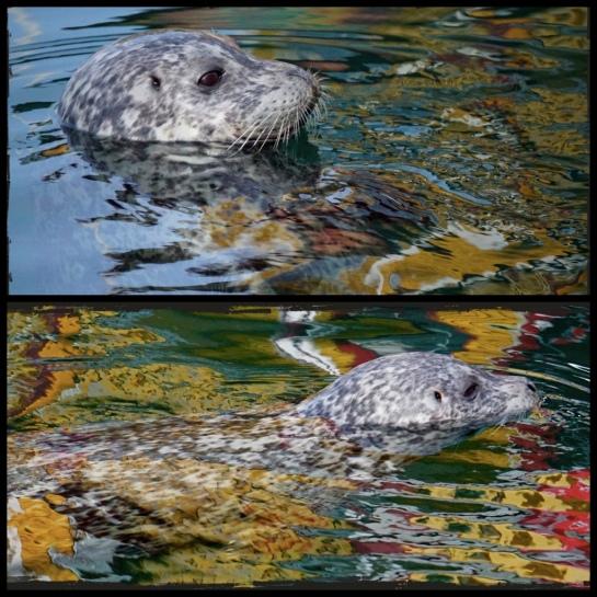Seal Diptic