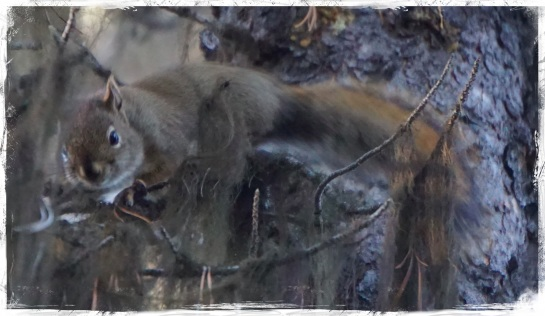 Squirrel - Lake Maligne - 5 Oct 2014