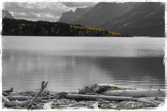 Waterton Lakes driftwood 1