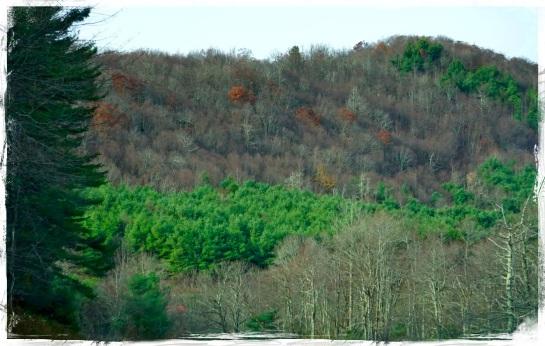 Blue Ridge Parkway x
