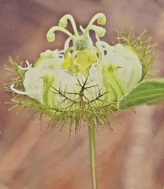 bush flower