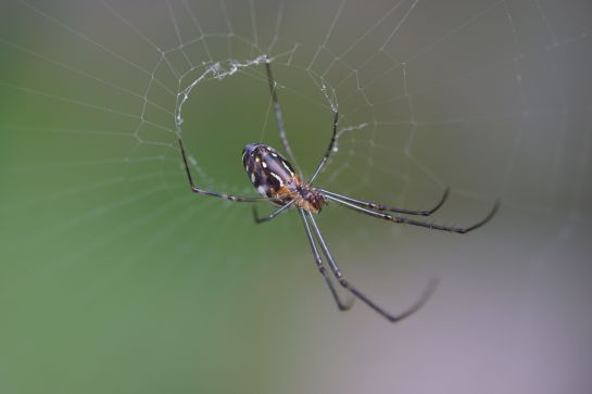 garden spider 1 - Canon lens and adapter