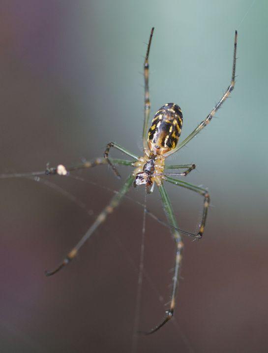 macro spider 1 - Canon lens - 28 Nov 2014