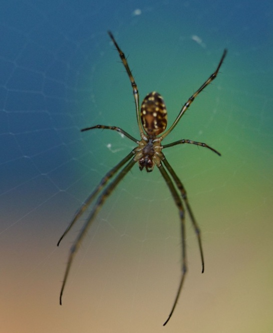 morning spider 1 - Canon lens