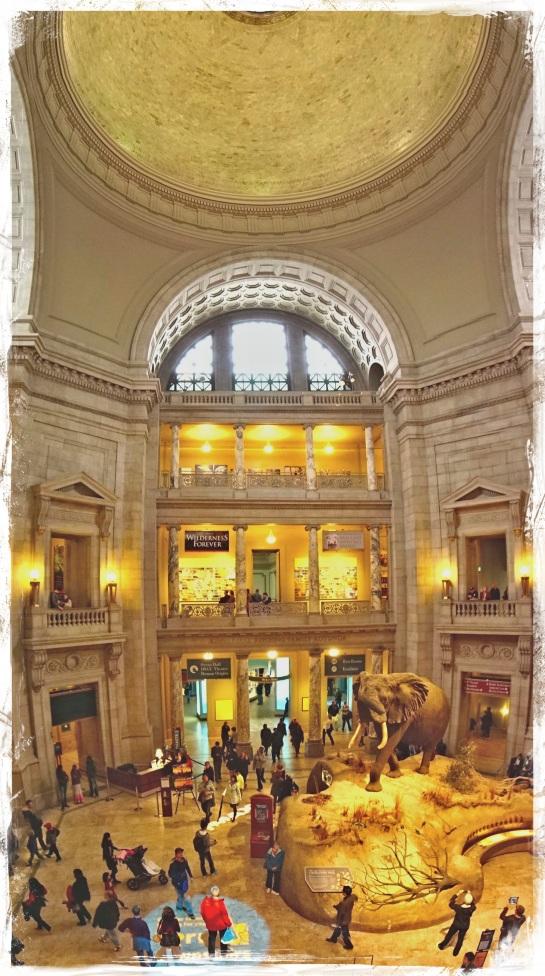 Museum of Natural History - rotunda