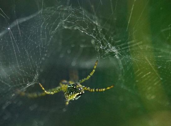 orb spider 3