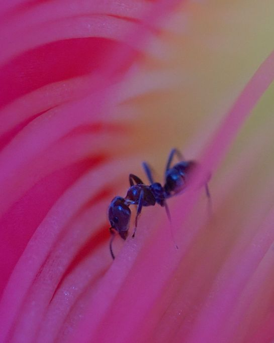 cactus flower 6