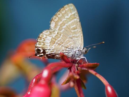 Monday morning Cabbage Moth