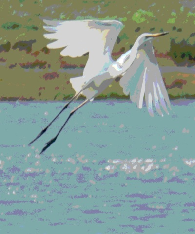 egret - Posterize 2