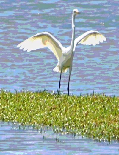 egret - Posterize 4