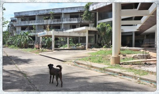 Dog at abandoned hotel