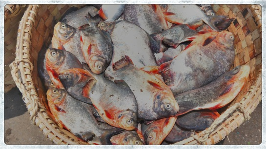 Fish trade - Irrawaddy River