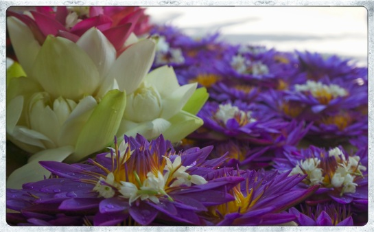 Floral gifts for the Buddha - Kandy