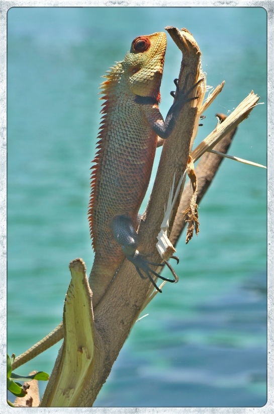 Lizard by South Beira Lake, Colombo