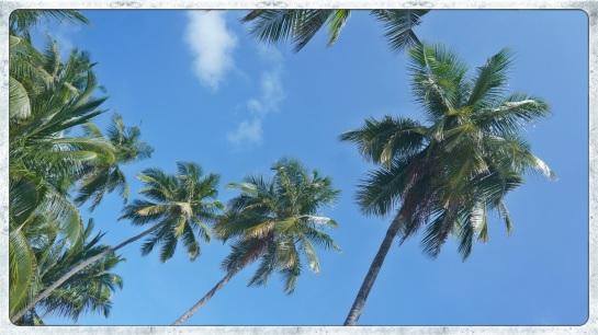 Meeru Island palms