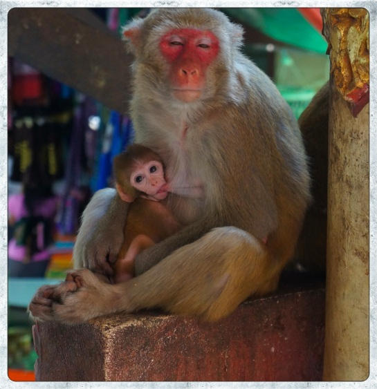Mt Popa - Monkey and baby