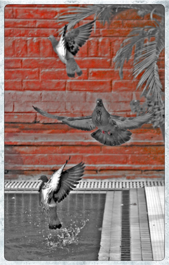 Pigeons Zfreeti Hotel 1