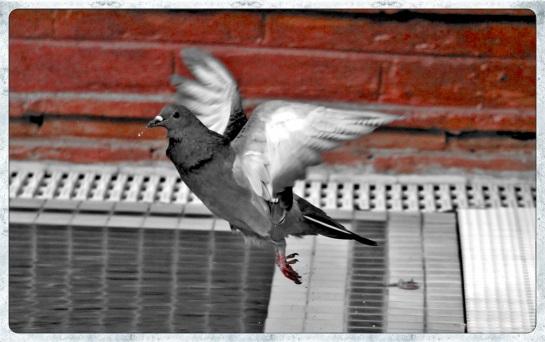 Pigeons Zfreeti Hotel 3