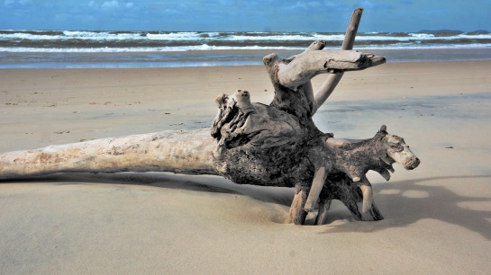 Inskip Point - driftwood on beach