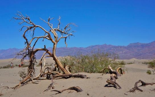 Mesquite Flat Dunes 1