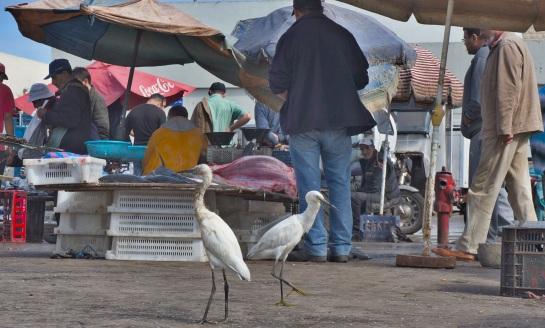 El Jadida fish market 1