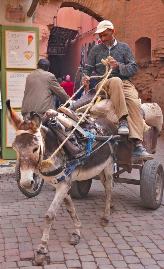 Marrakech 22 Oct 2015 - donkey