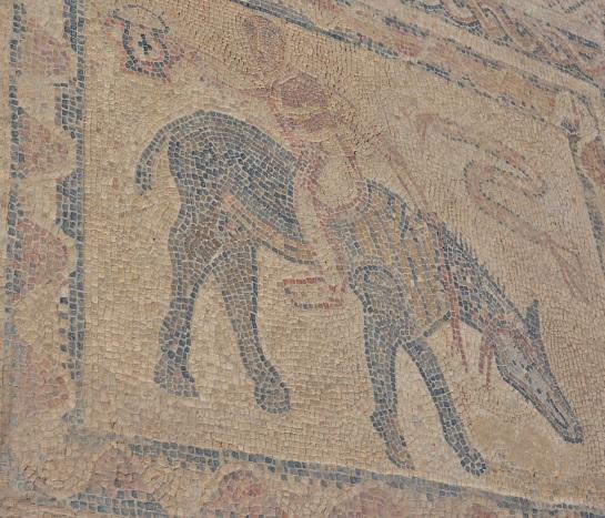 Volubilis 5 - House of the Acrobat - mosaic