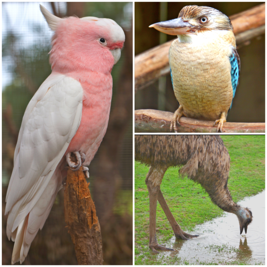 Birds - Phillip Island Wildlife Park - 12 June 2016