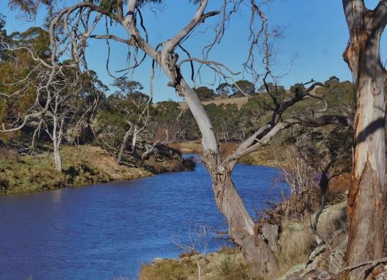 Bombala River NSW - Platypus reserve
