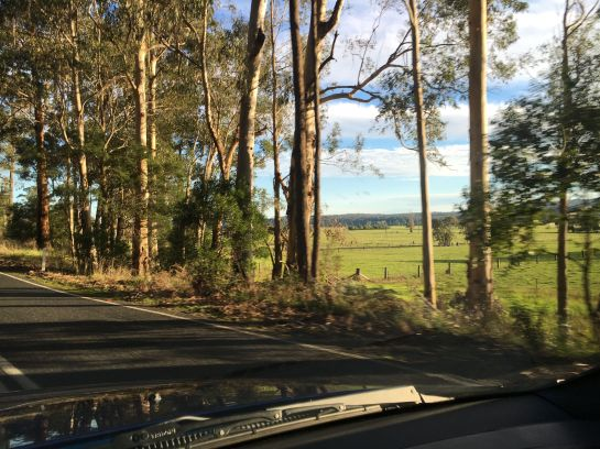 Late afternoon sun on the road to Lakes Entrance TC
