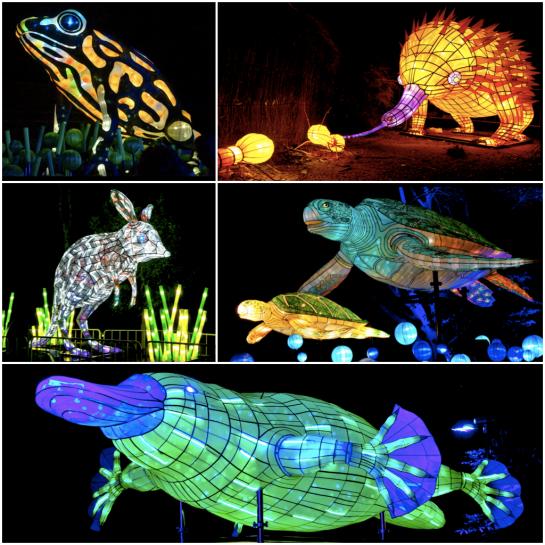Vivid Taronga Zoo - Diptic 1