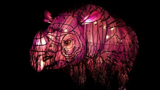 Vivid - Taronga Zoo - rhino