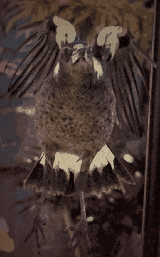 magpie-approaching-pop-grunge-2-fx-ancient-sm