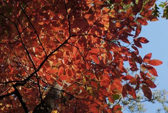 atlanta-autumn-colour-stone-mountain