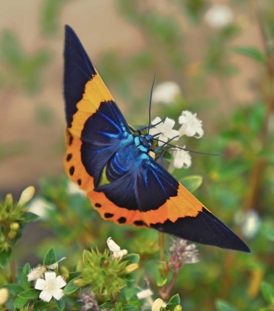 butterfly-near-dalat-6-oct-2016