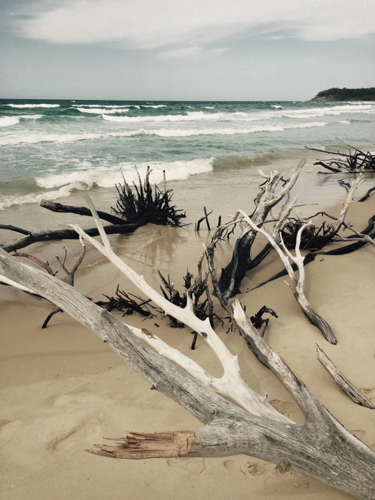 driftwood-stradbroke-island