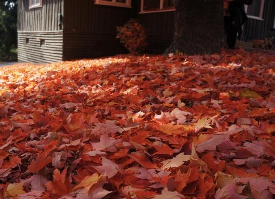kanuga-autumn-carpet-3-nov-2016_fotor