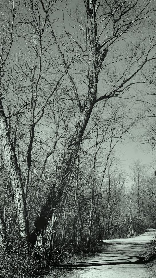 minihaha-park-walk_fotor