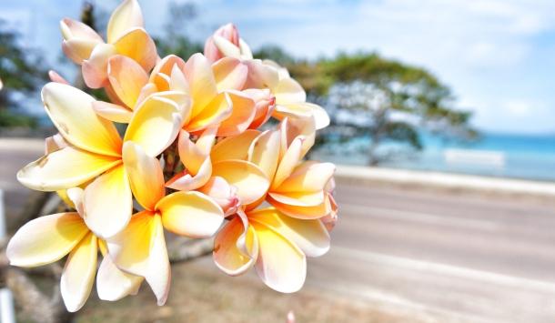 Flower at island